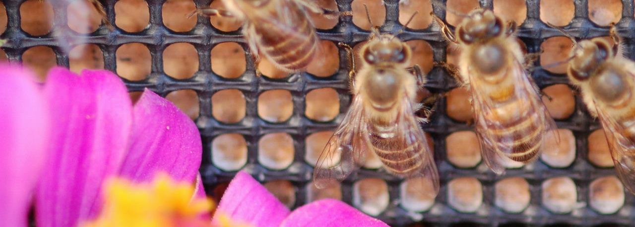 日本ミツバチ養蜂