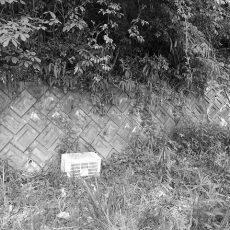 にほんミツバチ壊滅状態(静岡県西部地区)