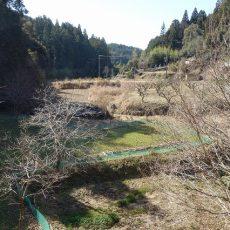 里山に春の訪れ、秘境探検2018