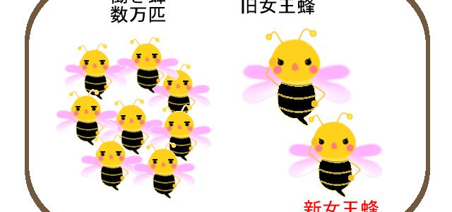 ミツバチ増えるといいな
