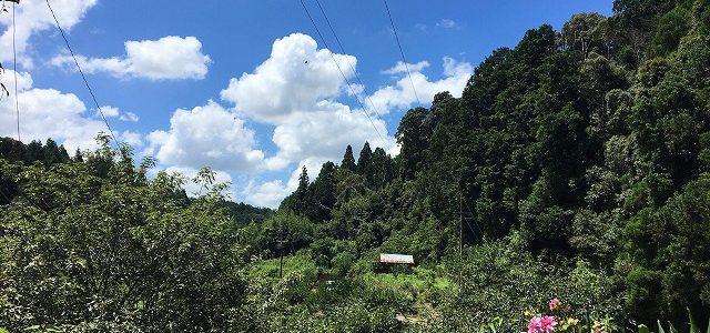 7/21 農業体験 in 里山